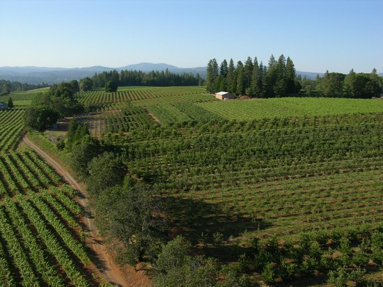Placerville, CA:                   El Dorado Wine Country by Unique Aeriography