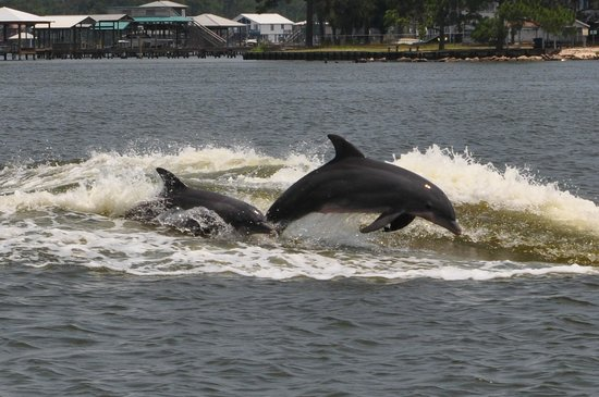‪Orange Beach Private Family Dolphin Tours & Boating Safaris‬