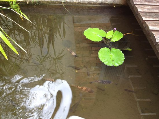 Railay Bay Resort & Spa:                   Lotus and fish pond