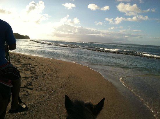 SeaGate Hotel:                   Horseback Riding on the Beach