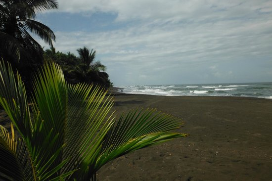 Laguna Lodge Tortuguero:                   Ocean & black sand beach