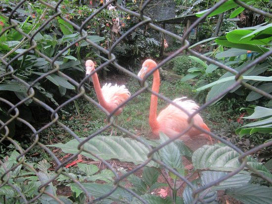 Zoologico de Santa Cruz