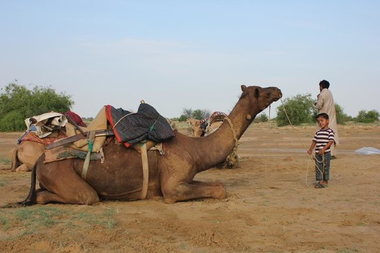 ‪Bobby's Independent Camel and Village Safari - Private Tours‬
