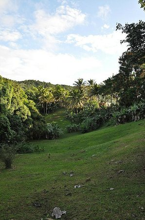Ceiba Country Inn: The grounds