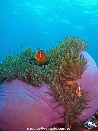 Nautilus Scuba: Taken at Twin Bommies