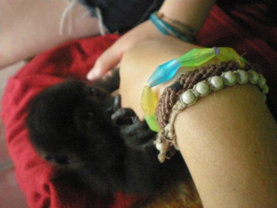 Costa Rica Wildlife Sanctuary:                   Uno de los animalitos que hay en el centro de rescate.