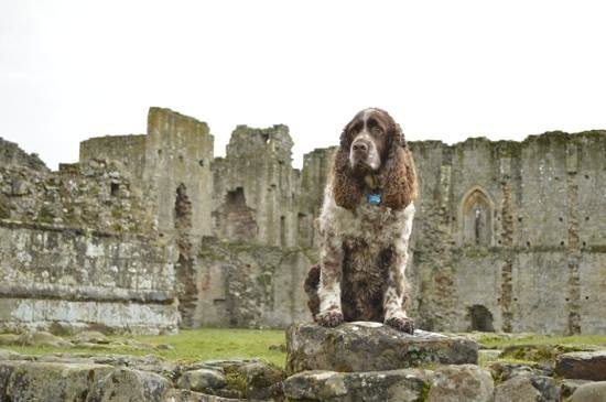 Easby Abbey:                   perfect backdrop for a photo shoot!