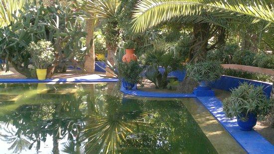 Riad Limouna:                   Jardin Majorel