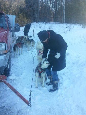 Barking Brook Sled Dog Adventures - Day Trips:                   Friendly pups pre-sled ride