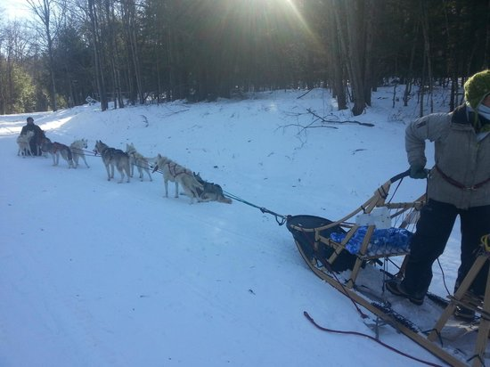 Barking Brook Sled Dog Adventures - Day Trips:                   Our team of 8 dogs