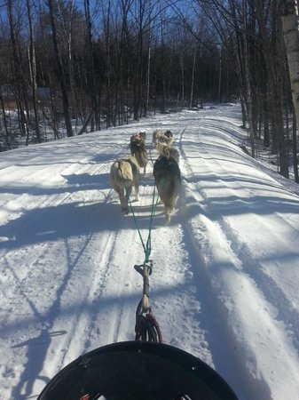 Barking Brook Sled Dog Adventures - Day Trips:                   Out on the trail