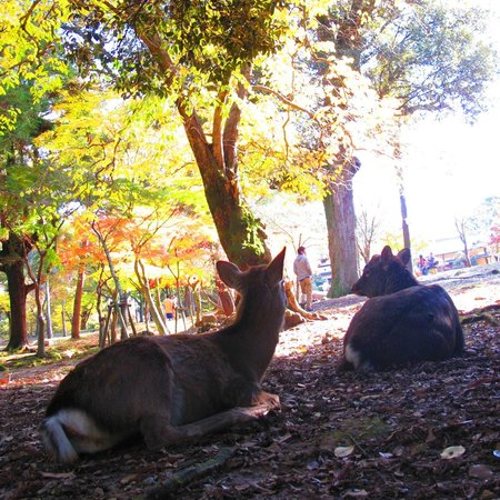 Nara Park: deers that don't just bother...