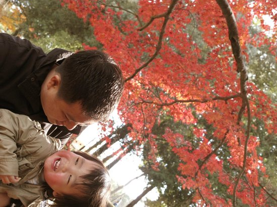 Nara Park: red leaves everywhere...