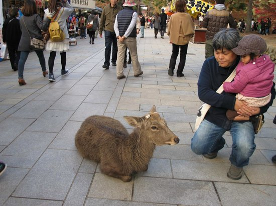 Nara Park: everywhere...