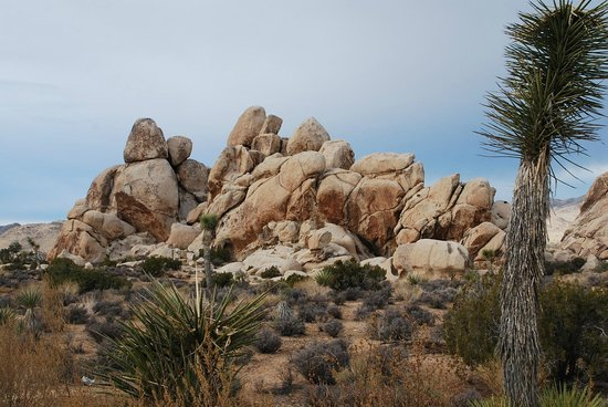 Jumbo Rocks Campground:                   park views