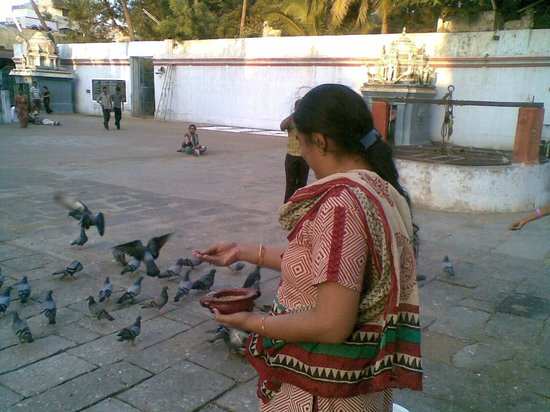 Kaaraneeswarar Temple:                   Amy and Pigeons