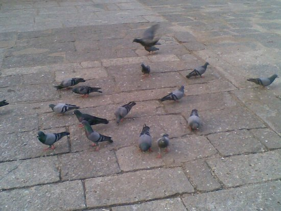Kaaraneeswarar Temple:                   Feeding the pigeons