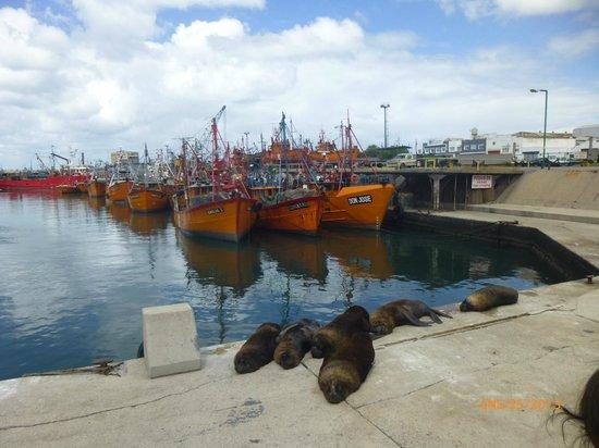 Puerto de Mar del Plata: Típica postal del puerto, barcos y lobos marinos
