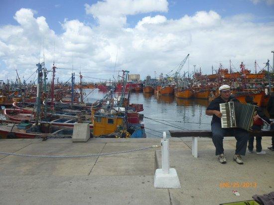 Puerto de Mar del Plata: El acordeonista, uno de los personajes habituales.