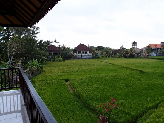 Sri Bungalows: View from the balcony at the front of the room.  Overlooking a paddy field.