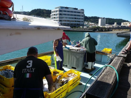 YHA Wellington :                                     Fish boat parked next to Te Papa