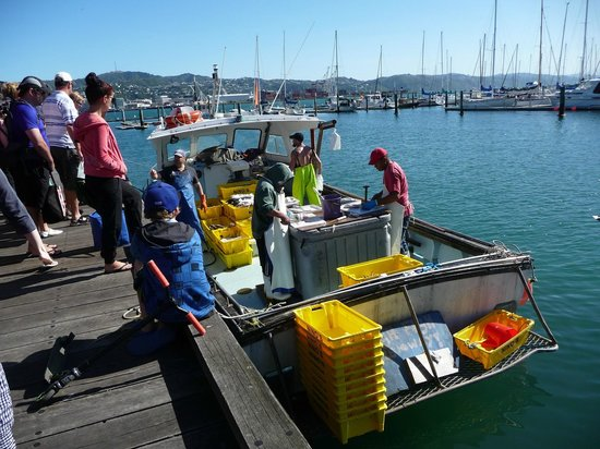 YHA Wellington :                                     Fish boat sells fresh and cheap seafood.