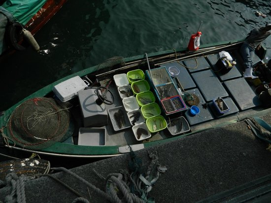 Sai Kung: Fresh catch of the day !