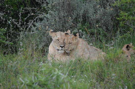 Shamwari Game Reserve Lodges:                                     Mom and her baby