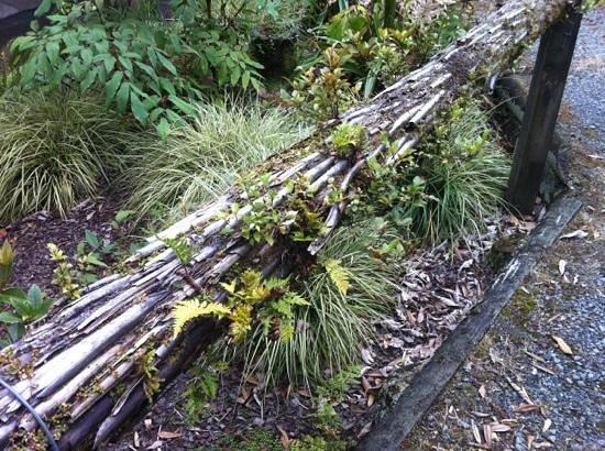 Pukeiti Rhododendron Garden: Living Handrail
