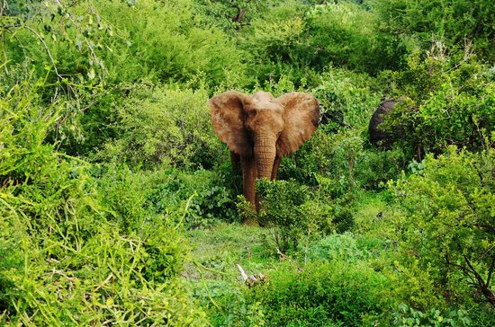 Ngorongoro Crater :                   Tembo