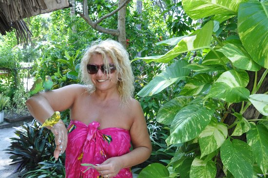 VOI Maayafushi Resort:                   bellissimi pappagallini