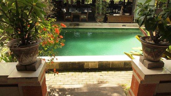 DePradha Guest House :                   Pool direkt vor der Terrasse