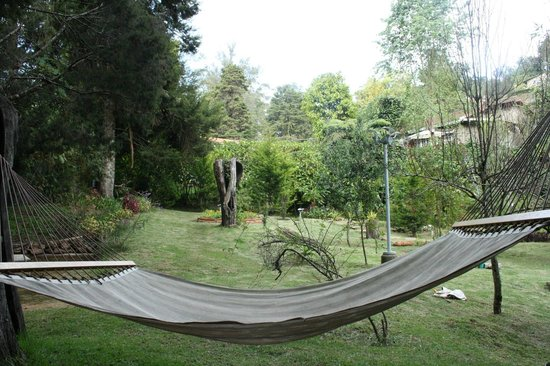 The Fern Creek: The lovely hammock and the grounds