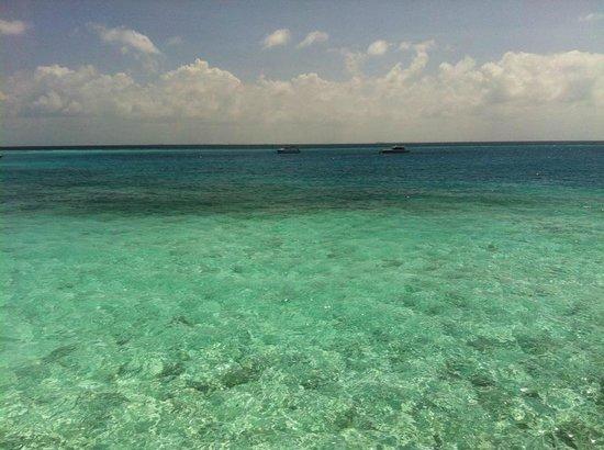 باروس جزر المالديف:                   Clear water @ Maldives Baros                 