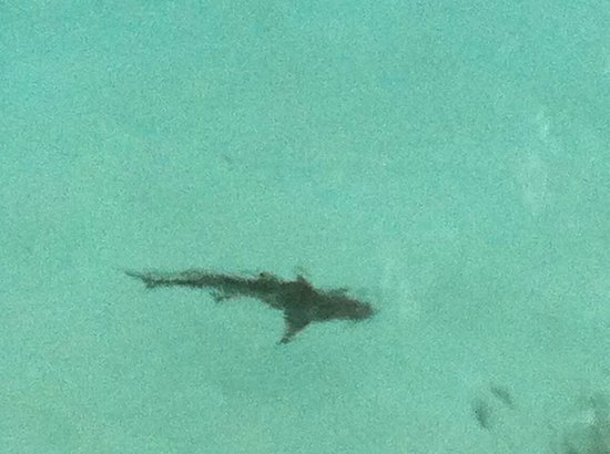 Baros Maldives:                   Baby's Shark @ Light house bar