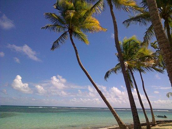 La Creole Beach Hotel & Spa:                   plage de la caravelle