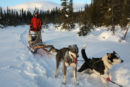 Are Mountain Lodge:                   Hondenslee, onvergetelijk