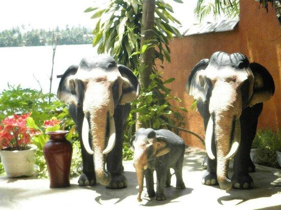 Sri Lancashire Guest House: Garden