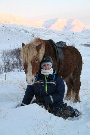 Laxnes Horse Farm:                   .                 