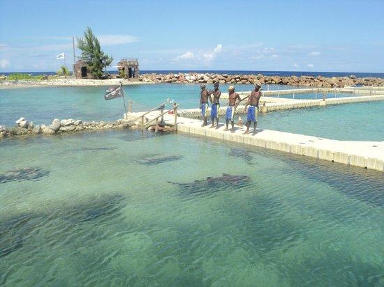 Dolphin Cove: uuuu nadan con los tiburones
