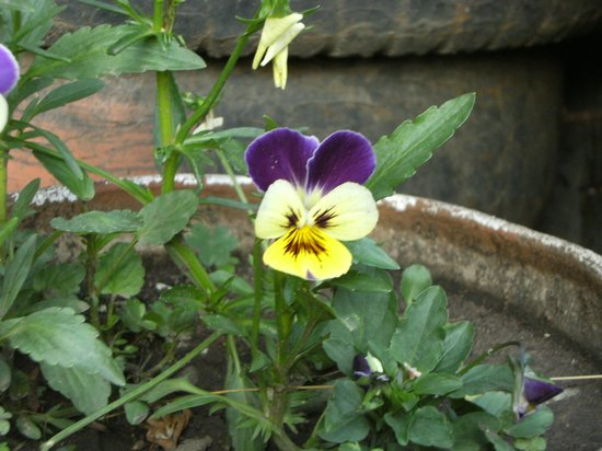 Giri Shingar Hotel:                   Beatiful flower in Garden, there are plenty eyecatching