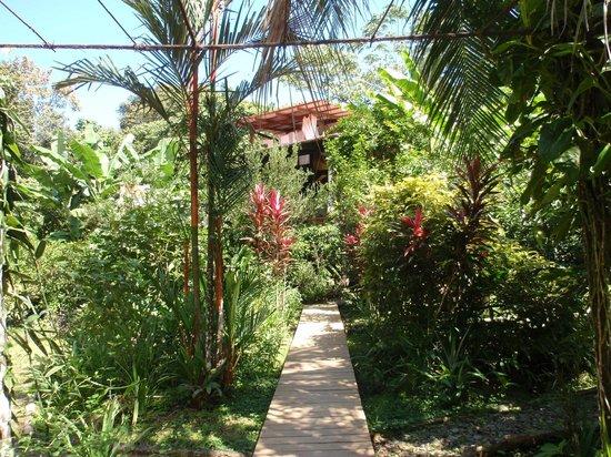 La Loma Jungle Lodge and Chocolate Farm:                   Entrance
