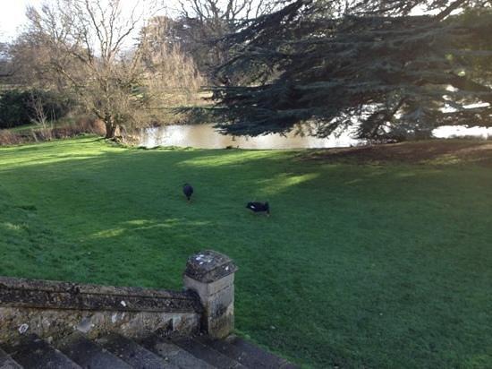 Dumbleton Hall Hotel:                   black swans by the lake