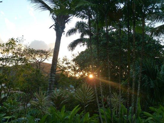 Habitation Grande Anse:                   Vu de la piscine