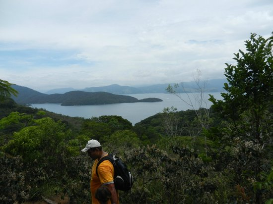 Tropical Forest:                   terrific view