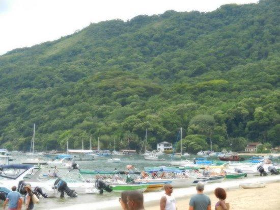Tropical Forest:                   abraão beach