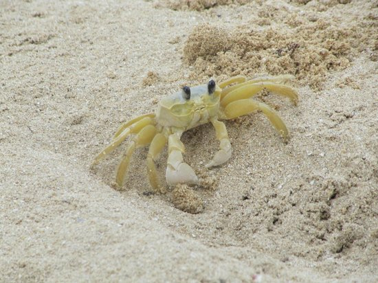 Jamaica Inn:                                     Buddy Crab