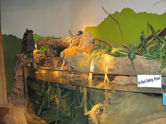 Chattahoochee Nature Center :                   Inside the Discovery Center:  Fish and turtles.