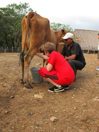 Morgan's Rock Hacienda and Ecolodge: Milking a Cow before Breakfast