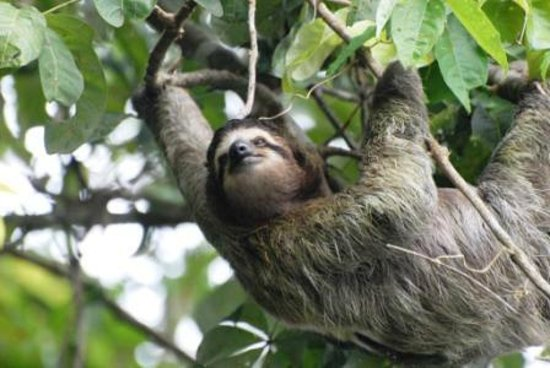 Hotel Manatus:                   Canal tour sloth